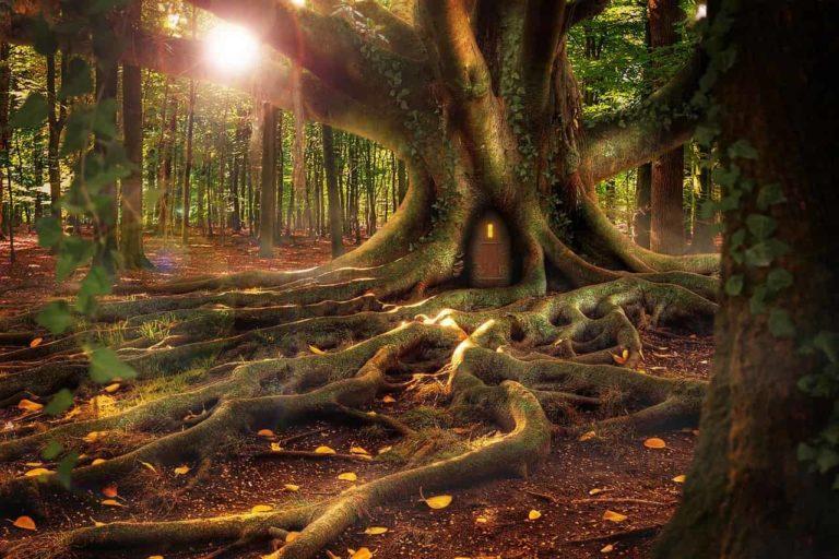 El bosque de Eco y Narciso