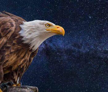 Aguila de Prometeo